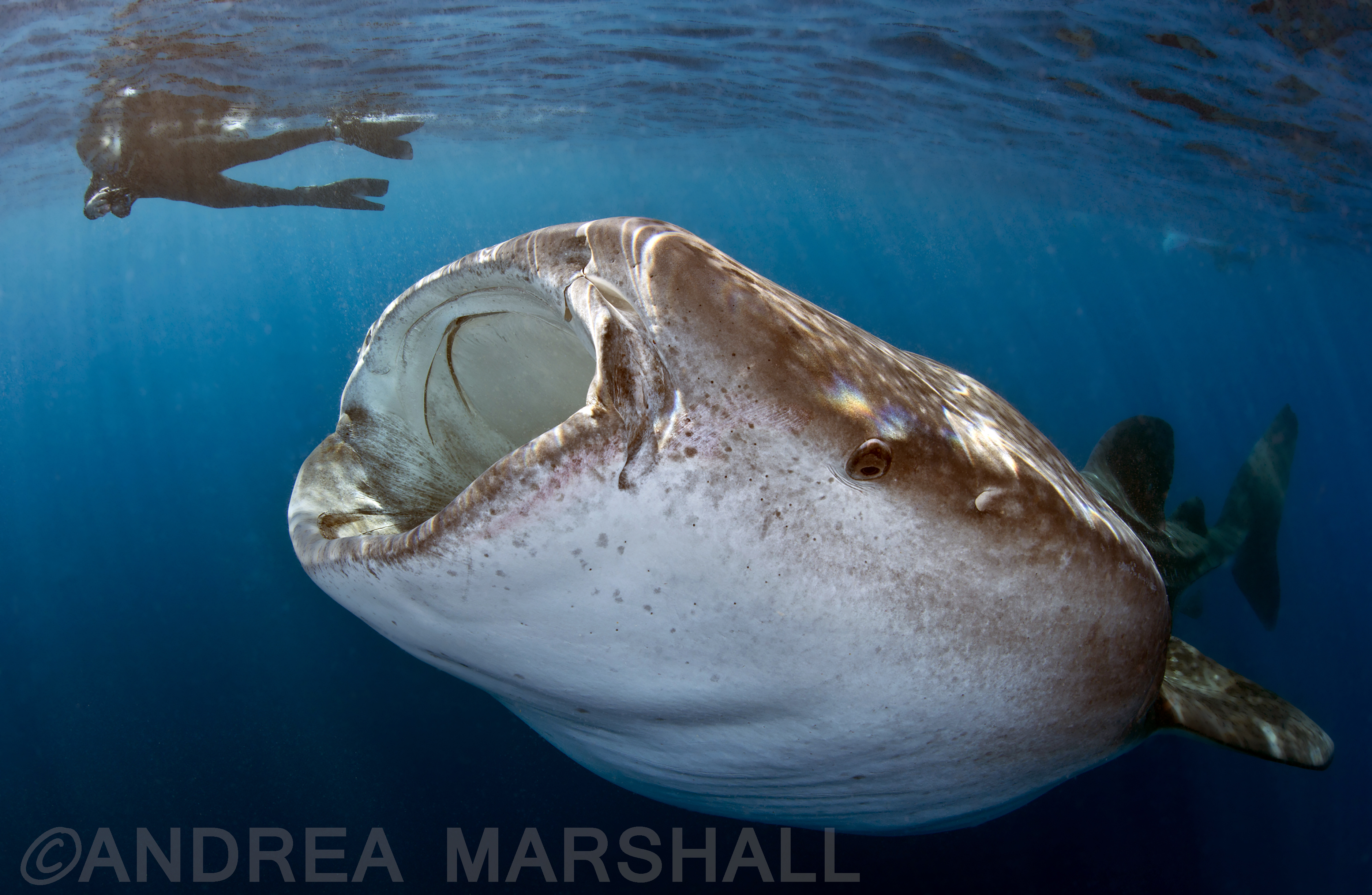 Tam and Whale Shark on ROHE Cancun EDITED AND WATERMARKED